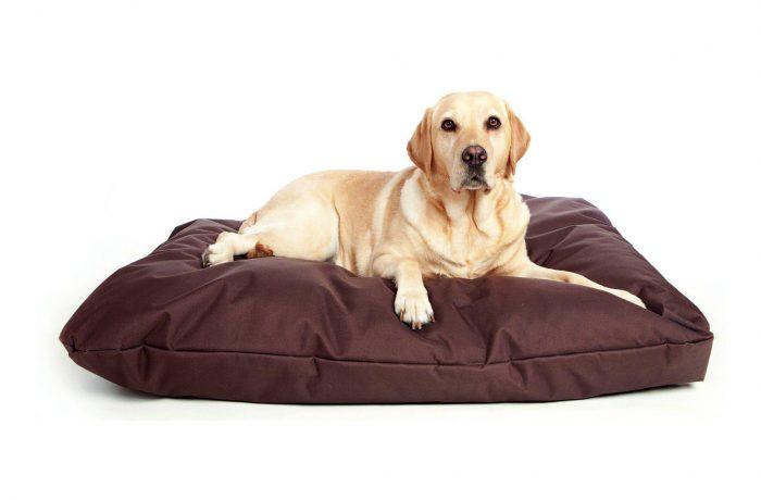 Giường Chó Cưng